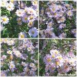 collage flori lila 20oct