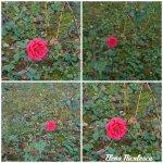 collage trand rosu 20oct