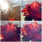 collage craciunitza la soare 14dec
