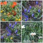 collage flori grad 8apr