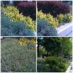 collage vegetatie unirii 24 apra