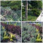 collage vegetatie Unirii 24apr