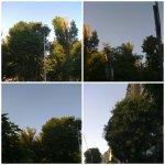 collage cer copaci 6iulie