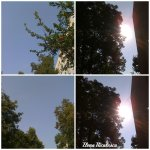 collage cer soare 7august