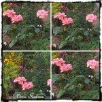 collage trand roz 6aug