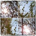 collage cer soare 1dec