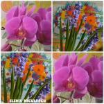 colaj 11 febr cu orhidee sizambile