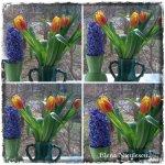 collage flori la geam 8martie