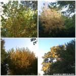 colaj 2 sept copaci div18
