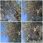 colaj 23 martie 19 copaciinfl