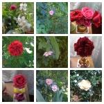 collage flori 24mai
