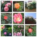 collage flori retro 31 mai pers